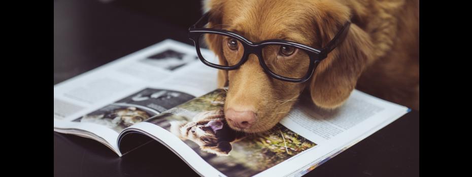 cachorro livro